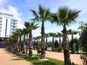 Курортный спа-отель Radisson Collection Paradise Resort & Spa Sochi